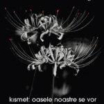 kısmet: oasele noastre se vor descompune atât de frumos – Andrada Yunusoglu